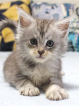Runrun_kitten3_18110105