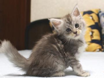 Runrun_kitten3_18110106