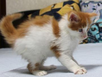 Runrun_kitten3_18110205
