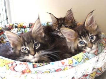 Ange_kittens_18110401