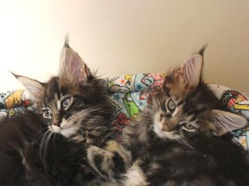 Ange_kittens_18110404
