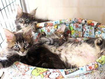Ange_kittens_18110405