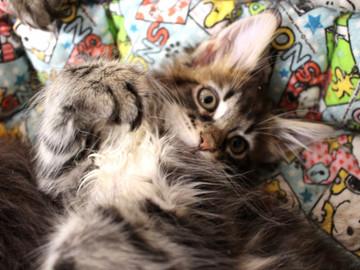 Ange_kittens_18110406