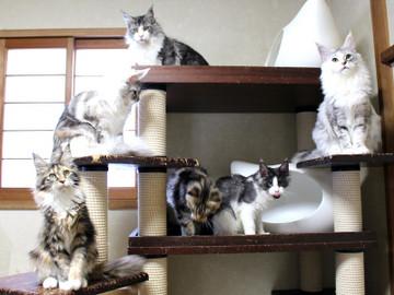 Kittens_18110401