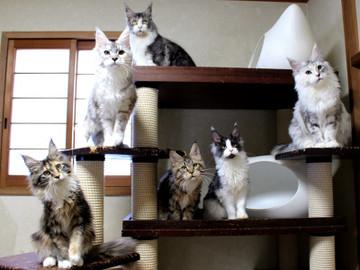 Kittens_18110402