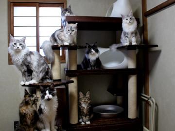 Kittens_18110404
