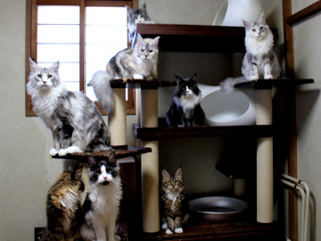 Kittens_18110405