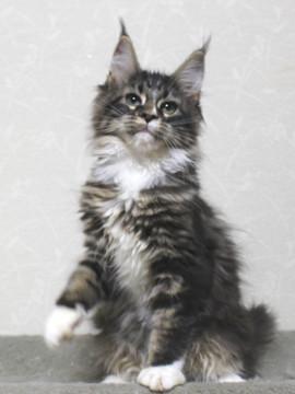 Cartier_kitten1_18110901