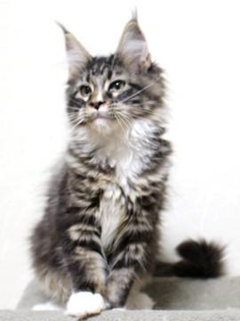 Cartier_kitten1_18110903
