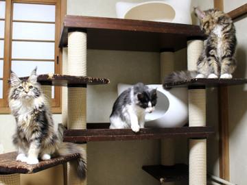 Waco_kittens_18111202