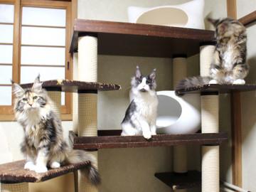 Waco_kittens_18111203