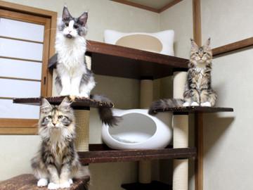 Waco_kittens_18111205