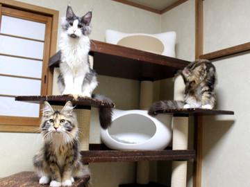 Waco_kittens_18111206