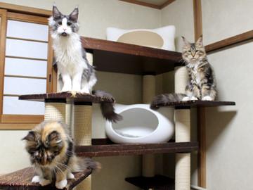Waco_kittens_18111207