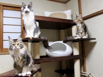 Waco_kittens_18111208
