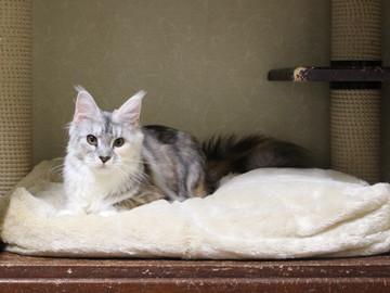 Kittens_18111601