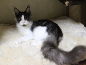 Kittens_18111602