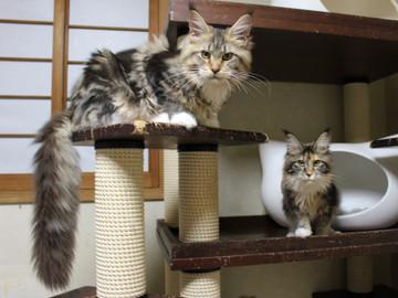 Kittens_18111604