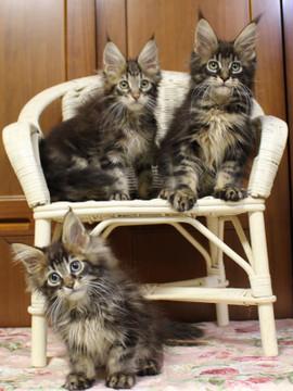 Ange_kittens_18111701