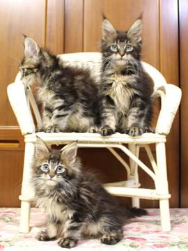 Ange_kittens_18111702