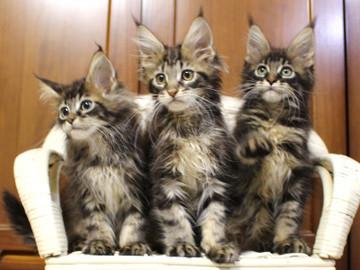 Ange_kittens_18111704