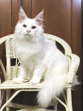 Buranco_kitten_18112102