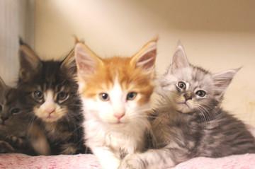 Runrun_kittens_18112101