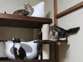 Cartier_kittens_18112201