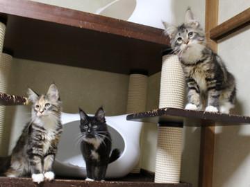 Cartier_kittens_18112202
