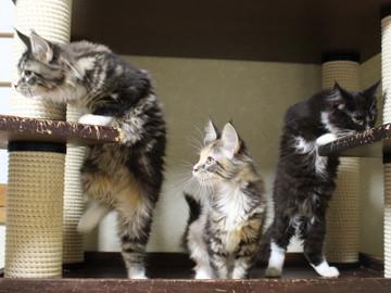 Cartier_kittens_18112203
