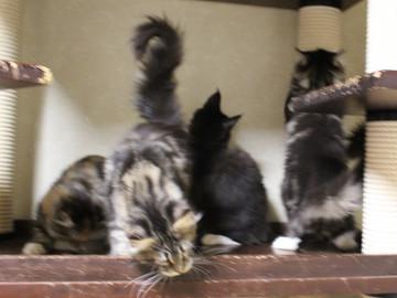 Cartier_kittens_18112204
