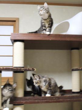 Cartier_kittens_18112206
