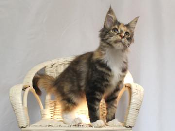 Cartier_kitten4_18112602