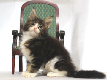 Runrun_kitten1_18112602