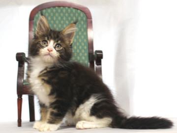 Runrun_kitten1_18112604
