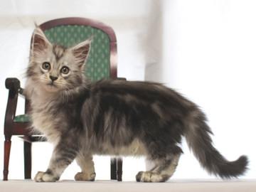 Runrun_kitten2_18112603