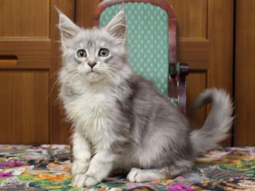 Runrun_kitten3_181201