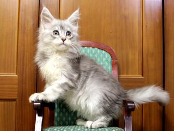 Runrun_kitten3_181203