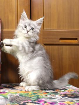 Runrun_kitten3_181206