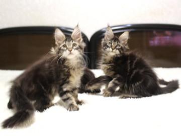 Ange_kittens_18120401