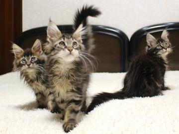 Ange_kittens_18120403