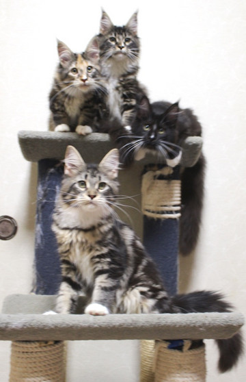 Cartier_kittens_18120501