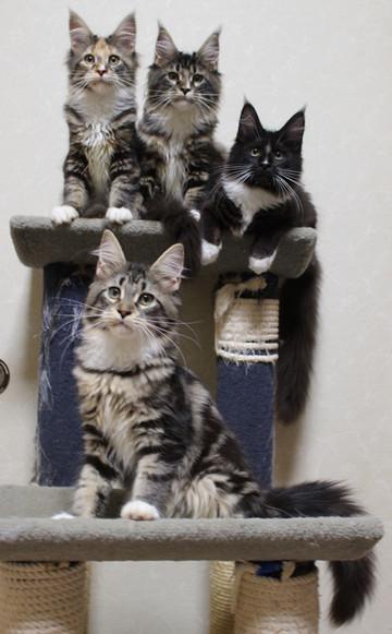 Cartier_kittens_18120502