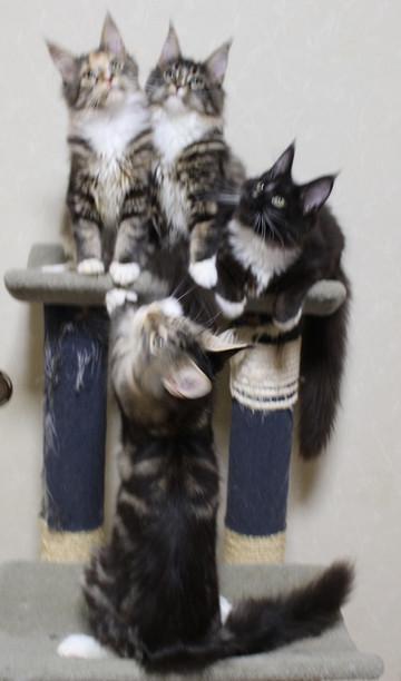 Cartier_kittens_18120503