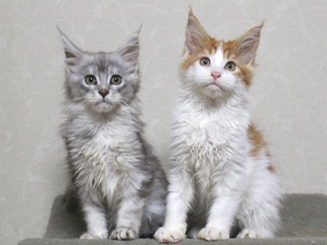 Runrun_kittens_18120602