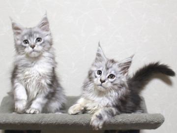 Runrun_kittens_18120603
