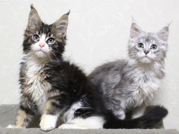Runrun_kittens_18120604