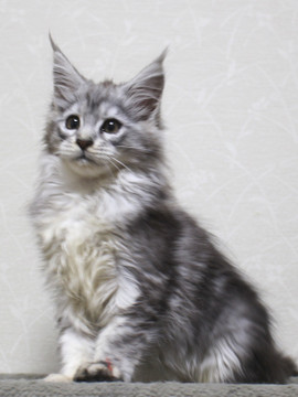 Runrun_kitten2_18121202_2