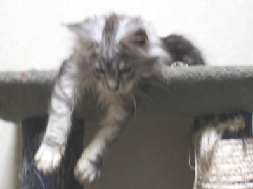 Runrun_kitten2_18121203