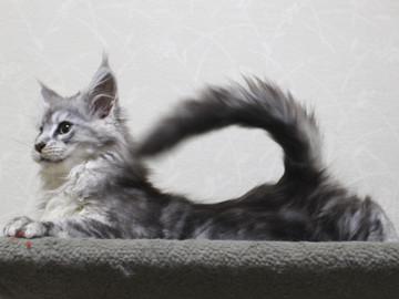 Runrun_kitten2_18121204